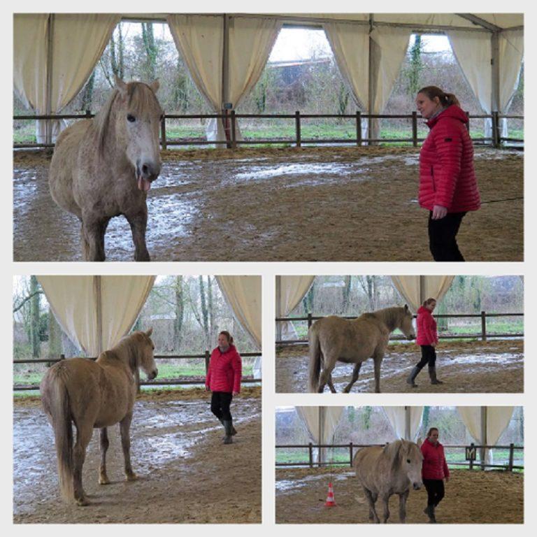 exercice equicoaching face à un cheval gris