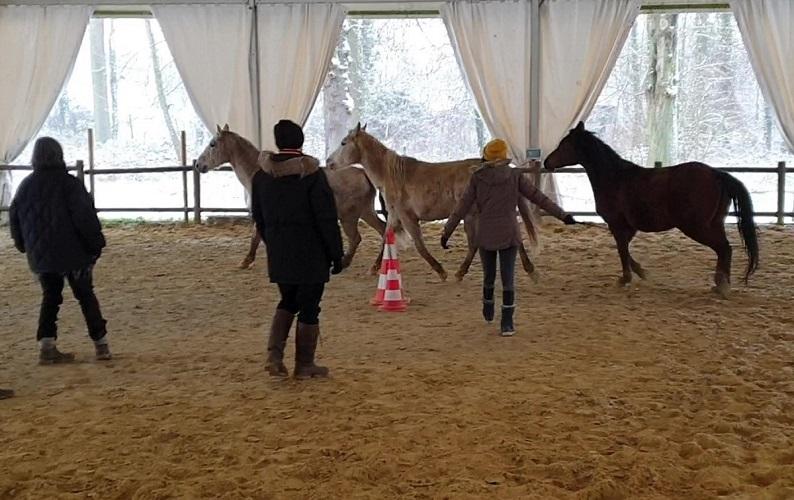 exercice collectif d'équicoaching avec 3 chevaux