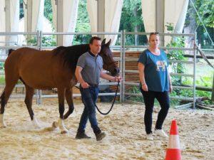 2 participants avec un cheval